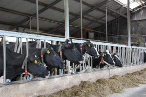 Vergaderen aan tafel of tussen de koeien