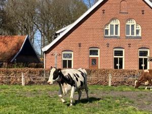 Onze droge koeien zijn weer naar buiten!